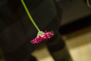 Persoonlijke uitvaartzorg. allemaal één bloem meenemen voor een bloemengroet