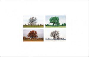 rouwkaart van een boom tijdens vier seizoenen