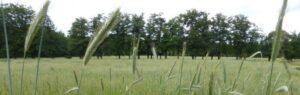 Begrafenis Arnhem. Een van de weides op Heidepol