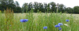 Uitvaart Arnhem, Heidepol: voor een graf in het bos of open terrein