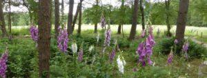Begrafenis Gorssel. een plek in het bos of open terrein