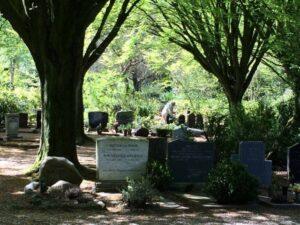 Begraafplaats Steenbrugge, oude bomen