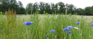 Zicht op het veld bij Heidepol