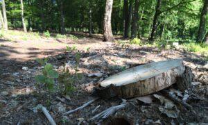 een houten schijf markeert de plaats van het graf